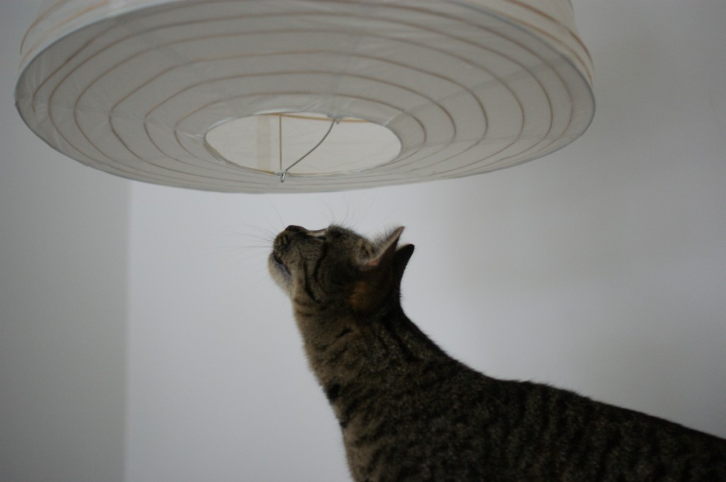 kitty likes the lamps - Inside Wanderer